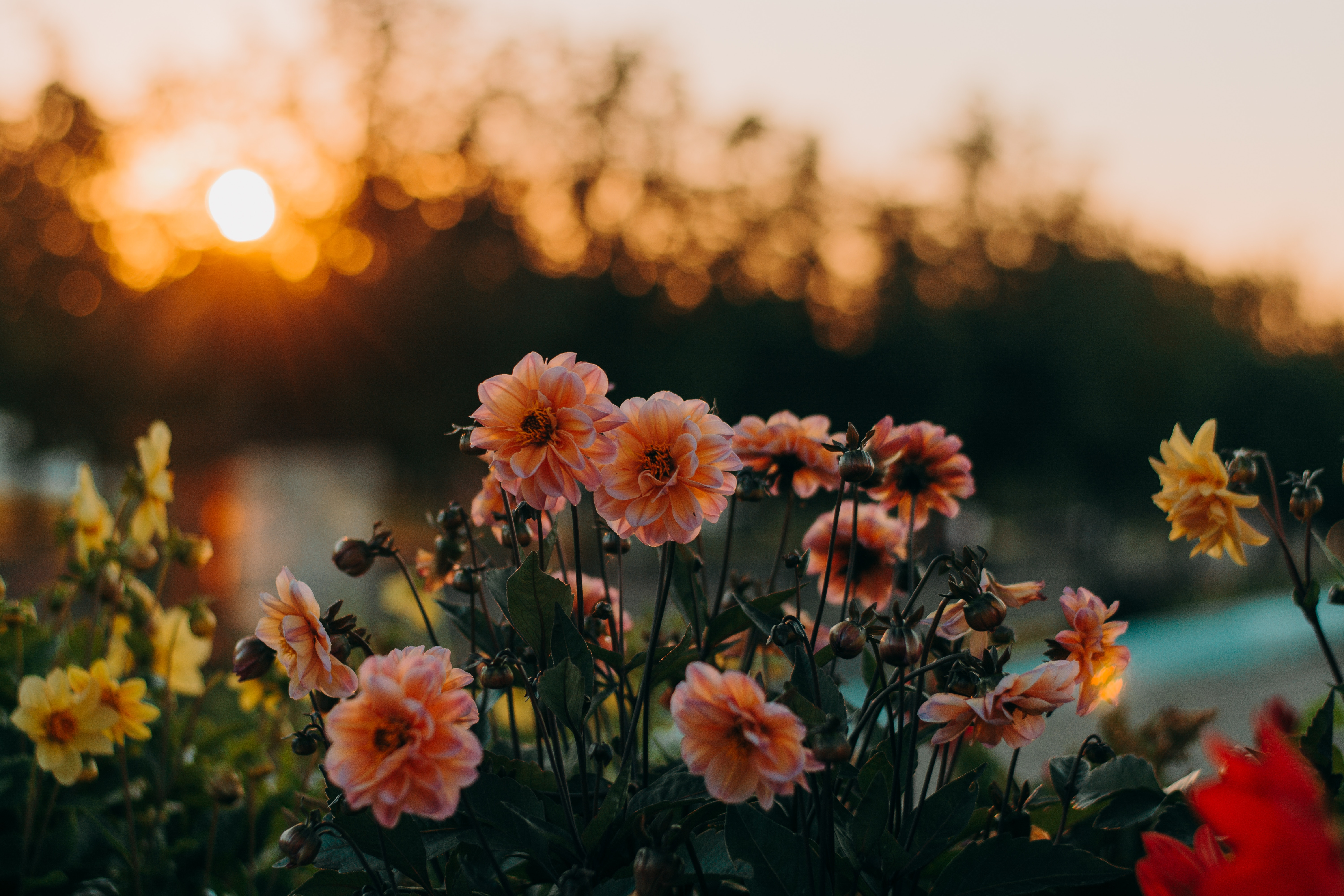 10 Beautiful Quotes About Flowers Spark Quote